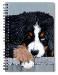 Bernese Mountain Dog Spiral Notebooks