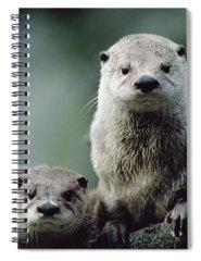 Northern River Otter Photographs Spiral Notebooks
