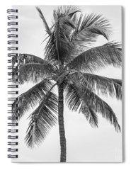 Palm Branch Spiral Notebooks