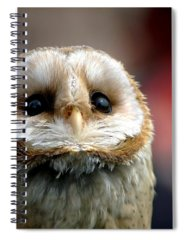 Birds Of Prey Spiral Notebooks