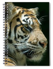 Fauna Spiral Notebooks