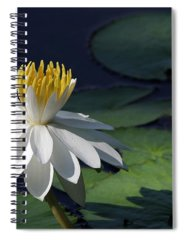 Designs Similar to White Night Blooming Water Lily