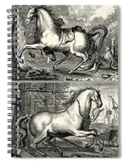 Designs Similar to Galloping Horses I by Unknown