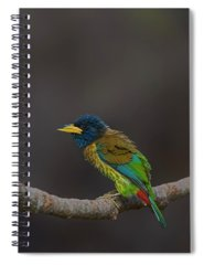 Beautiful Nature Spiral Notebooks