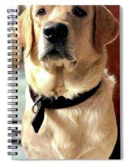 Labrador Dog Photographs Spiral Notebooks