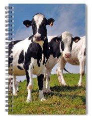 Cow Spiral Notebooks