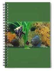 Animals Spiral Notebooks