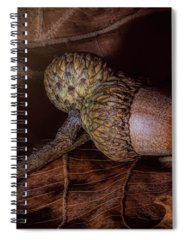 Acorn Spiral Notebooks