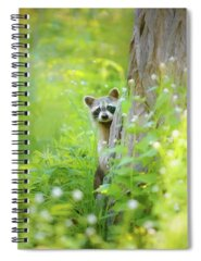 Woods Spiral Notebooks