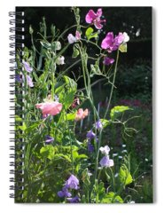 Meadow Spiral Notebooks