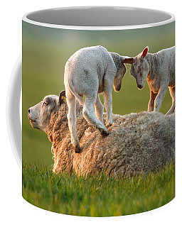 Leap Sheeping Lambs Coffee Mug