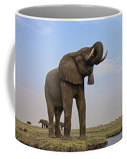African Elephant Drinking Chobe River Coffee Mug