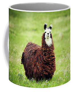 An Alpaca Vicugna Pacos Poses Coffee Mug
