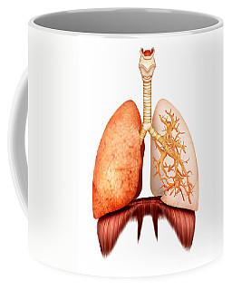 Anatomy Of Human Respiratory System Coffee Mug