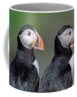 Atlantic Puffins In Breeding Colors Coffee Mug