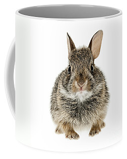 Baby Cottontail Bunny Rabbit Coffee Mug