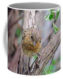 Baby Robin Coffee Mug