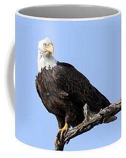 Bald Eagle 7 Coffee Mug