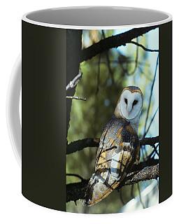 Barn Owl Tyto Alba Worldwide Range High Coffee Mug