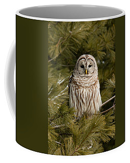 Barred Owl In A Pine Tree. Coffee Mug