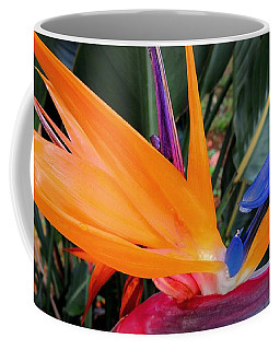 Bird Of Paradise Coffee Mug by Kristine Merc