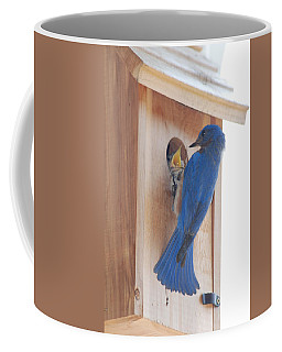 Bluebird Of Happiness Coffee Mug