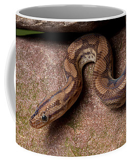 Colombian Rainbow Boa Epicrates Maurus Coffee Mug