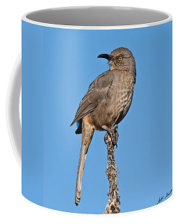 Curve-billed Thrasher Coffee Mug