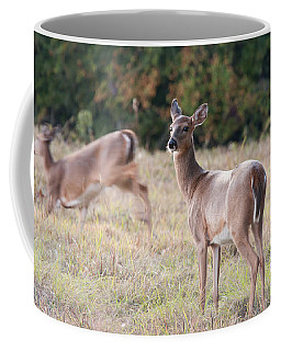 Deer At Paynes Prairie Coffee Mug