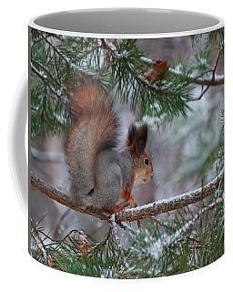 Eurasian Red Squirrel Coffee Mug
