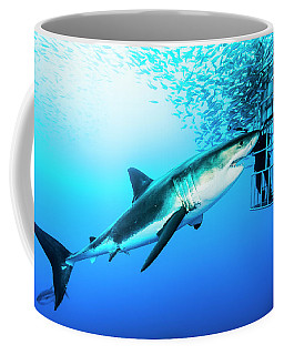Female Great White Shark, Carcharodon Coffee Mug