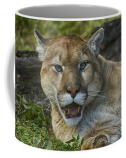 Florida Panther Coffee Mug by Anne Rodkin