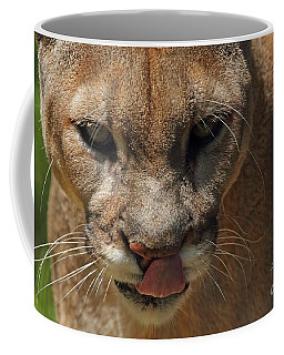 Coffee Mug featuring the photograph Florida Panther by Meg Rousher