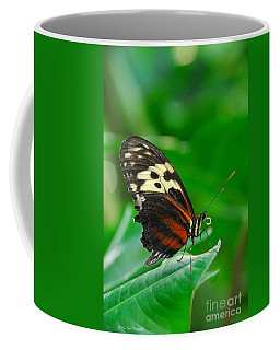 D5l15 Butterfly At Franklin Park Conservatory Coffee Mug