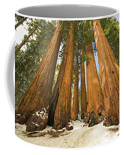 Giant Sequoias Sequoia N P Coffee Mug