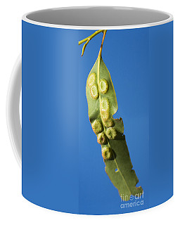 Gum Leaf Galls Coffee Mug