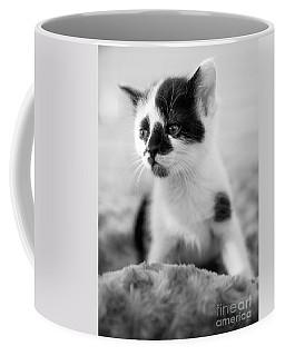 Kitten Dreaming Coffee Mug