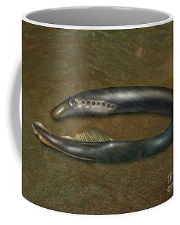 Lamprey Eel, Illustration Coffee Mug