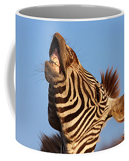 Coffee Mug featuring the photograph Laughing Zebra by Nick  Biemans