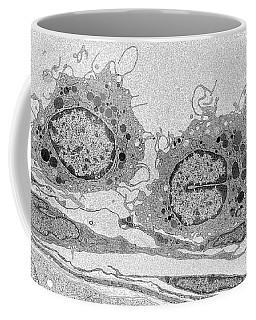 Macrophages Tem Coffee Mug