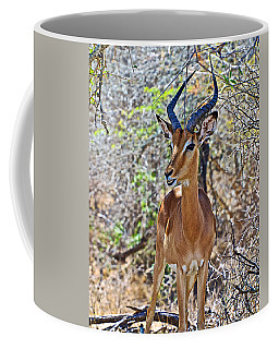 Male Impala In Kruger National Park-south Africa   Coffee Mug