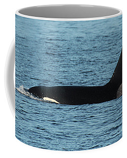 Coffee Mug featuring the photograph Male Orca Killer Whale In Monterey Bay California 2013 by California Views Mr Pat Hathaway Archives