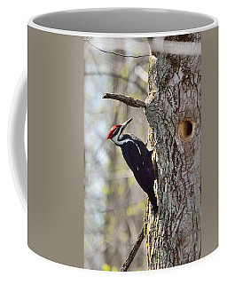 Coffee Mug featuring the photograph Male Pileated Woodpecker by David Porteus