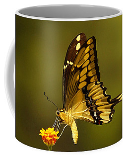 Momentary Reflection Coffee Mug