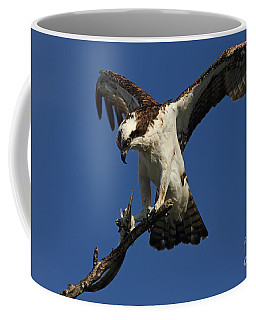 Coffee Mug featuring the photograph Osprey With A Fish Photo by Meg Rousher