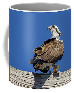 Coffee Mug featuring the photograph Osprey With Fish In Talons by Dale Powell