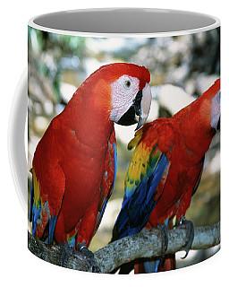 Pair Of Scarlet Macaws On Branch Coffee Mug
