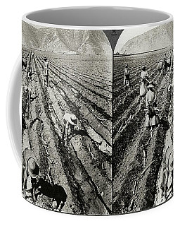Peru Sugar Cane, C1910 Coffee Mug