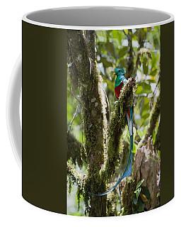 Resplendent Quetzal Male Costa Rica Coffee Mug
