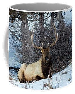 Coffee Mug featuring the photograph Rocky Mountain Elk by Michael Chatt